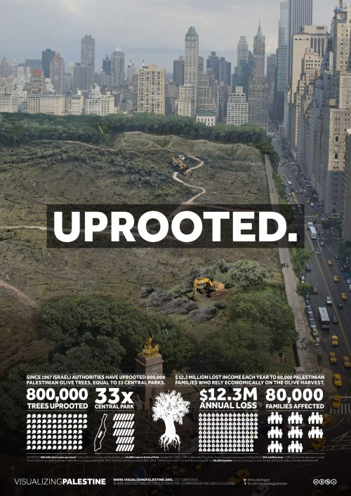 Uprooted! 800,000 Olive Trees!